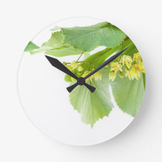 Blossoming twig of limetree or linden tree clocks