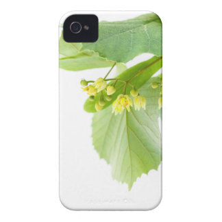 Blossoming twig of limetree or linden tree iPhone 4 covers