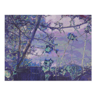 Blossoms Abstract Violet Postcard