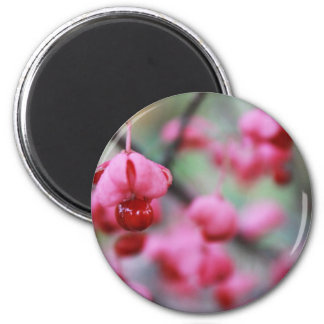Blossoms Magnets
