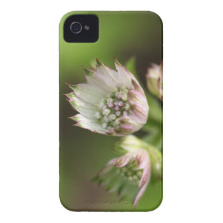 Blossoms of a great masterwort Case-Mate iPhone 4 case