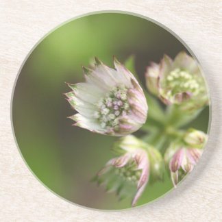 Blossoms of a great masterwort drink coasters