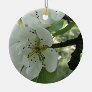 Blossoms of a pear tree in spring . Tuscany, Italy Round Ceramic Ornament
