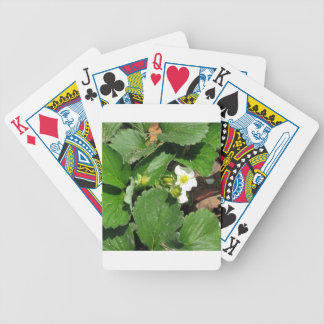 Blossoms of strawberry poker deck