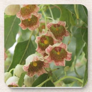 Blossoms of the Eastern Strawberry Tree Coaster