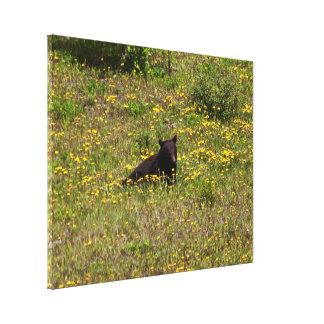 BLST Black Bear Snack Time Stretched Canvas Prints