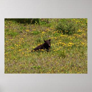 BLST Black Bear Snack Time Poster