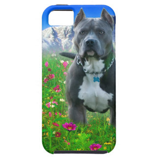 Blue American Pit Bull Terrier, Pikes Peak iPhone 5 Cover