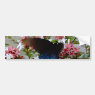 Blue and Black Butterfly on pink flowers Bumper Sticker