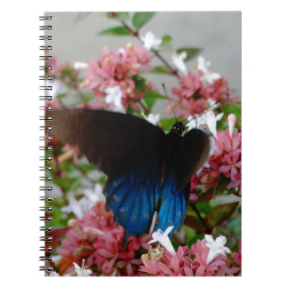 Blue and Black Butterfly on pink flowers Notebook