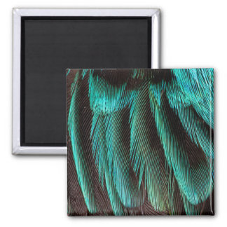 Blue And Black Feather Design Magnet