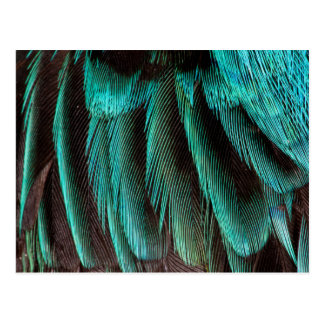 Blue And Black Feather Design Postcard