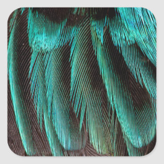 Blue And Black Feather Design Square Sticker