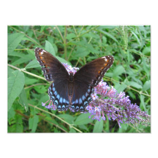 Blue and Brown Butterfly ~ Photo