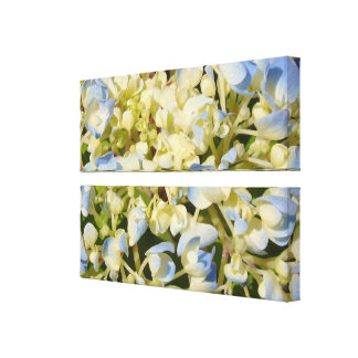 Blue and creamy white hydrangea flowers photo canvas print
