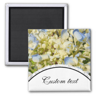 Blue and creamy white hydrangea flowers photo magnet