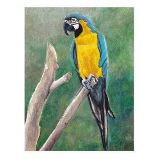 Blue and Gold Macaw Bird Art Postcard