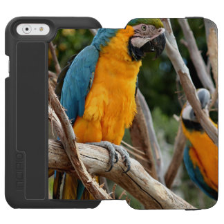 Blue And Gold Macaw Incipio Watson™ iPhone 6 Wallet Case