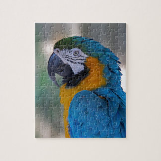 Blue and Gold Macaw Jigsaw Puzzle