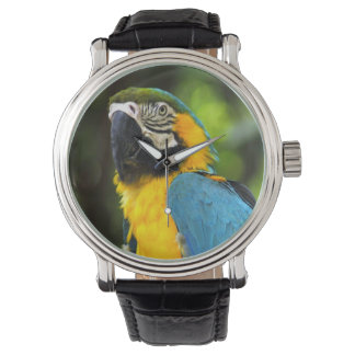 Blue and Gold Macaw Watch
