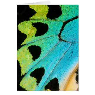 blue and green butterfly wing card
