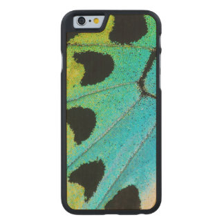 blue and green butterfly wing carved maple iPhone 6 case