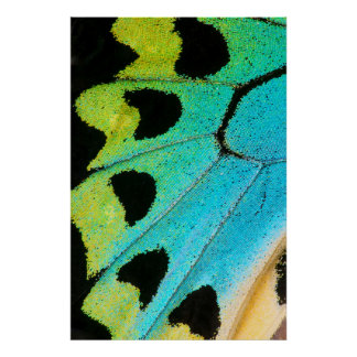 blue and green butterfly wing poster