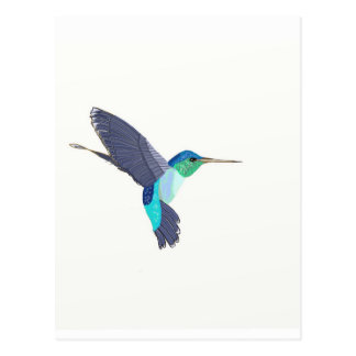 Blue and Green Humming Bird Postcard