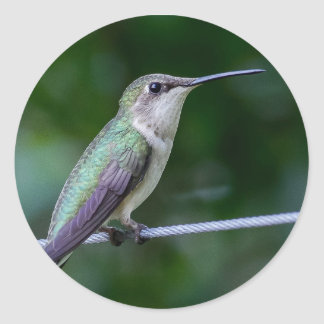 Blue and Green Hummingbird Sticker - Round
