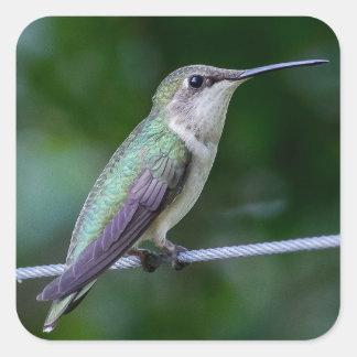 Blue and Green Hummingbird Sticker - Square Small