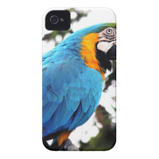 Blue and Orange Parrot on Branch iPhone 4 Case