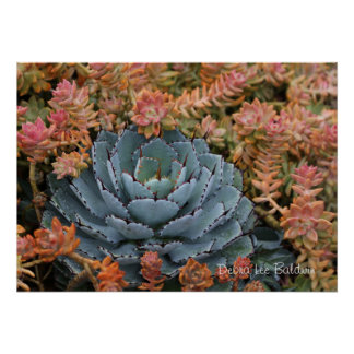 Blue and orange succulents poster