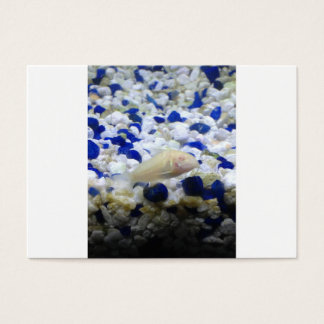 Blue and white pebbles and Albino cat fish Business Card