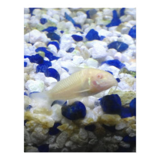 Blue and white pebbles and Albino cat fish Letterhead
