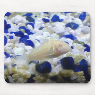 Blue and white pebbles and Albino cat fish Mouse Pad