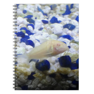 Blue and white pebbles and Albino cat fish Notebook