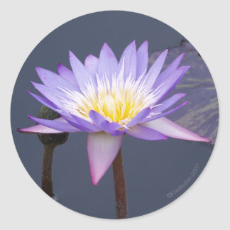 Blue And White Water Lily Sticker