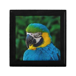 Blue and Yellow Bird Gift Box