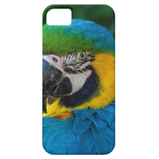 Blue and Yellow Bird iPhone 5 Covers