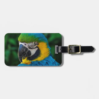 Blue and Yellow Bird Luggage Tag