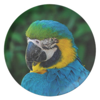 Blue and Yellow Bird Plate