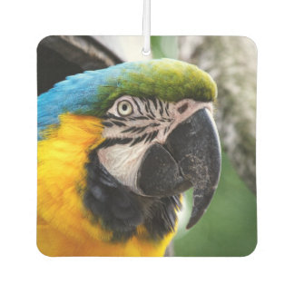 Blue and yellow macaw. air freshener