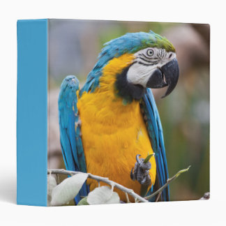 Blue and Yellow Macaw Binder