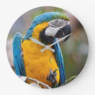 Blue and Yellow Macaw Clock