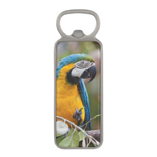 Blue and Yellow Macaw Magnetic Bottle Opener
