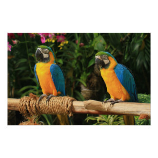 Blue and Yellow Macaw Print
