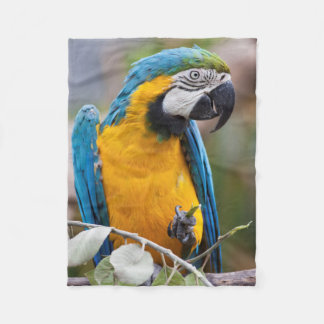 Blue and Yellow Macaw Sherpa Blanket