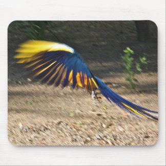 Blue-and-Yellow Macaw takes flight Mouse Pad