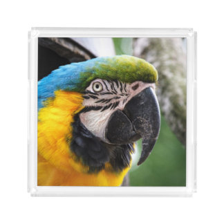 Blue and yellow macaw tray. acrylic tray