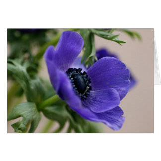 Blue anemone card